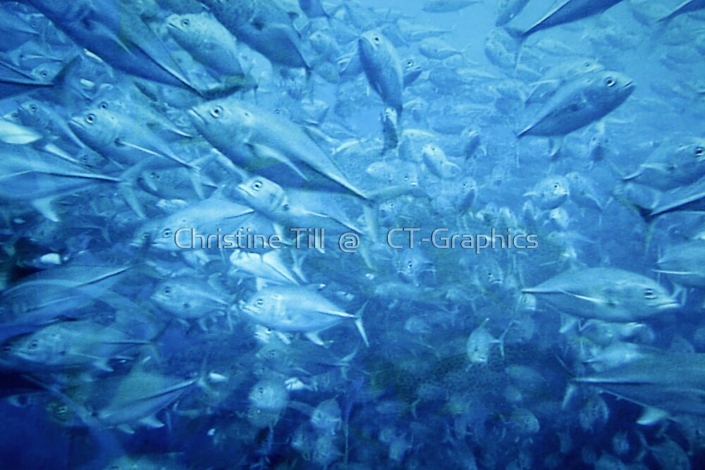 Fish Schooling Harmonious Patterns Throughout The Sea by Christine Till  @    CT-Graphics