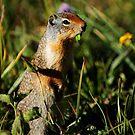 Glacier Squirrel 1 by artsphotoshop