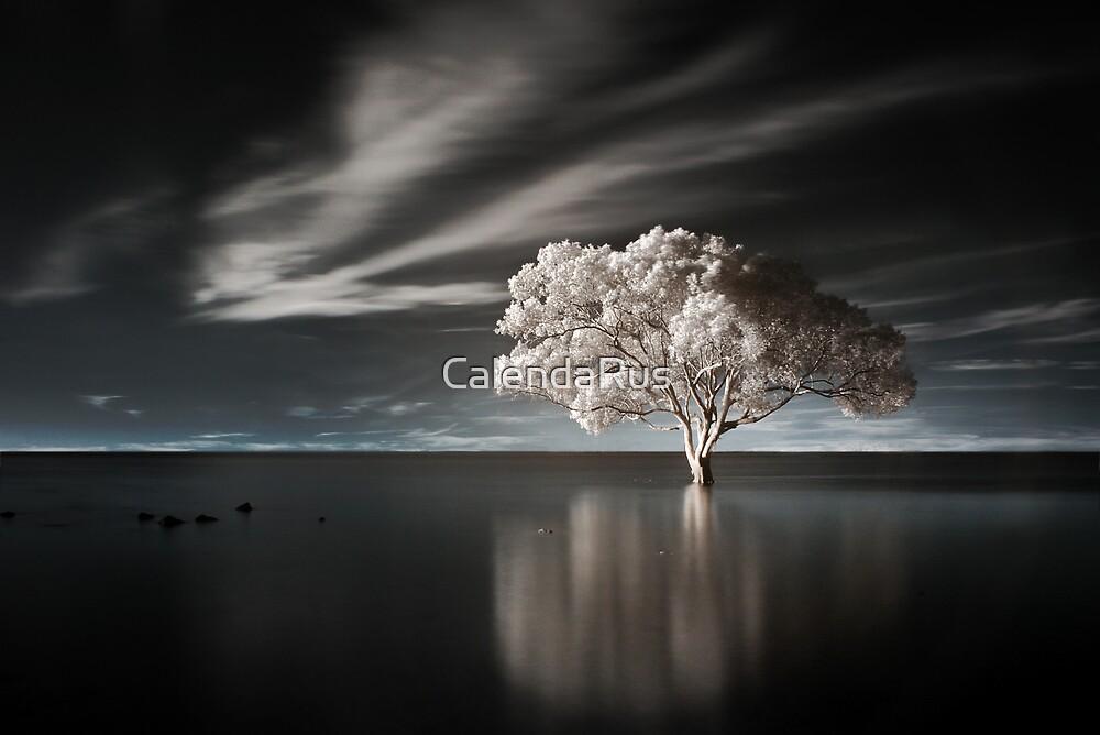 Tree in Water by CalendaRus