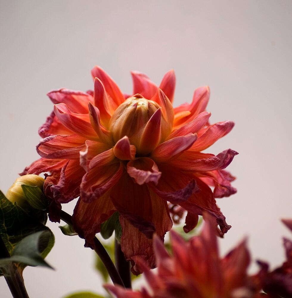 flower... by londongirl