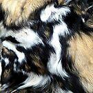 Fur by Bluesrose