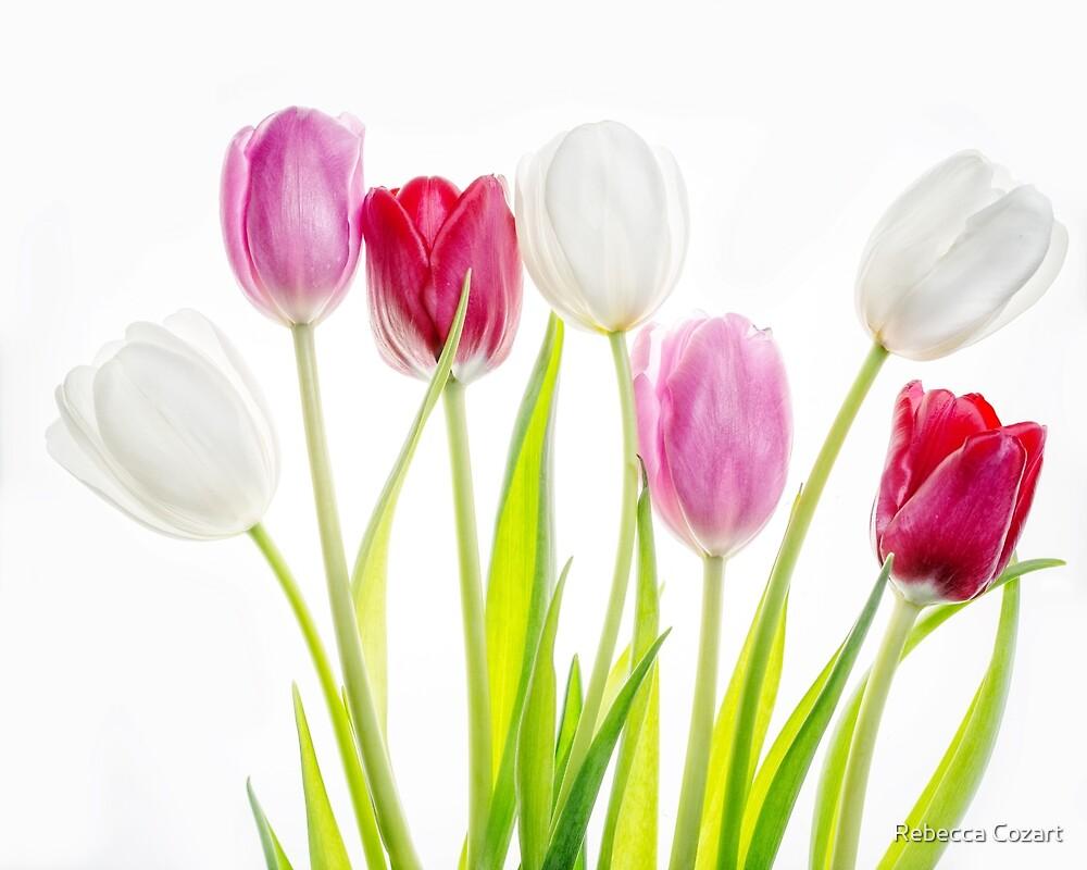 Tulips by Rebecca Cozart
