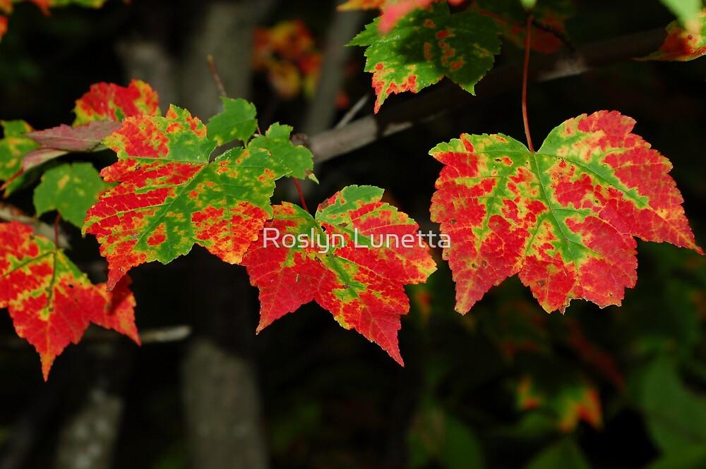 nature's tie dye by Roslyn Lunetta