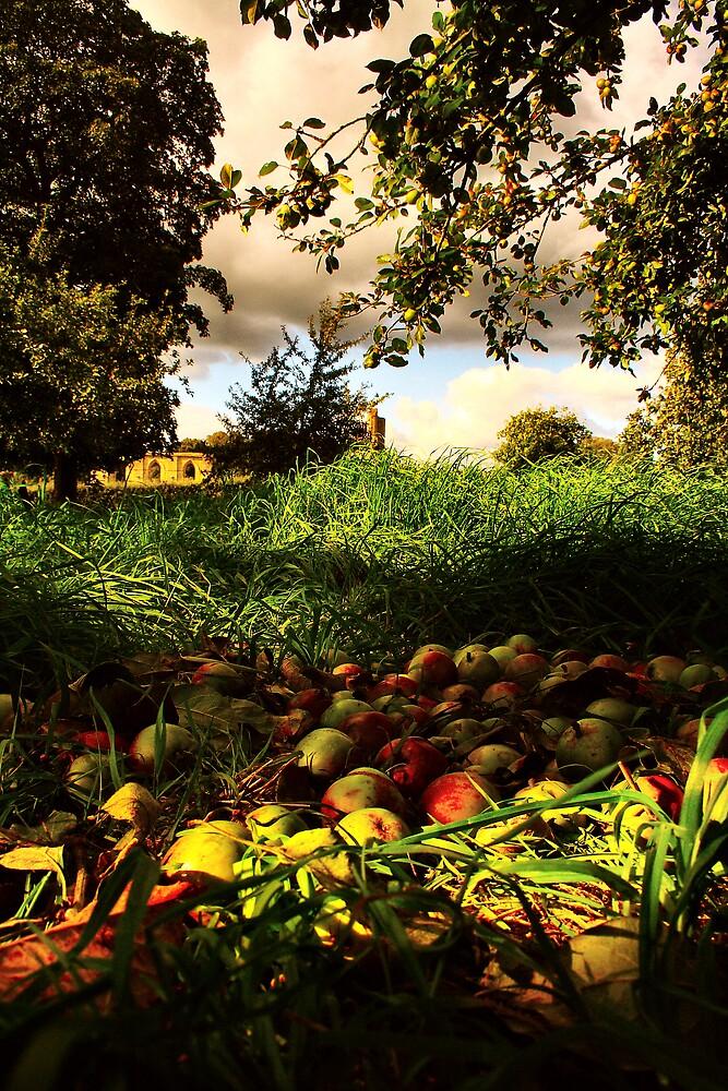 Fallen Apples by torimages