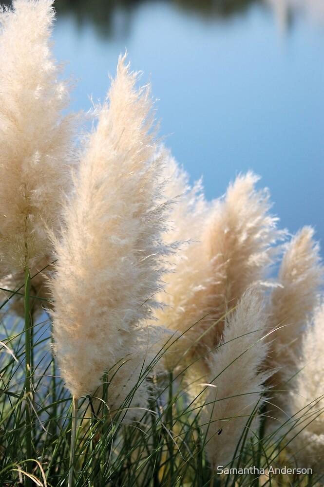 Pompus Grass by Samantha Anderson