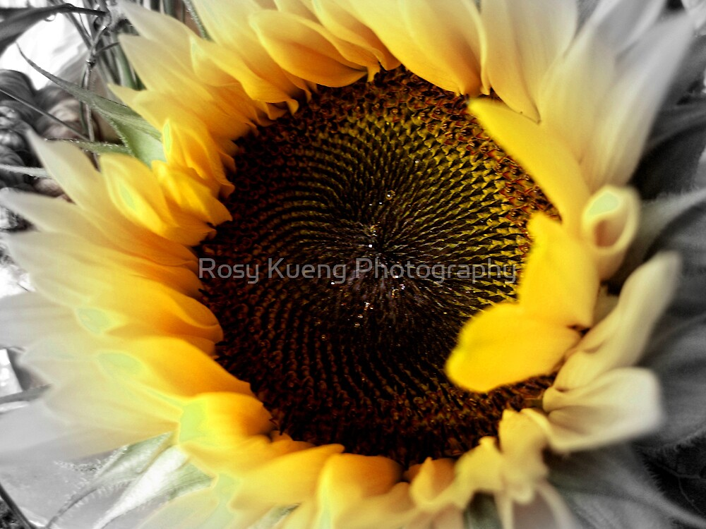 Colour me Beautiful by Rosy Kueng Photography