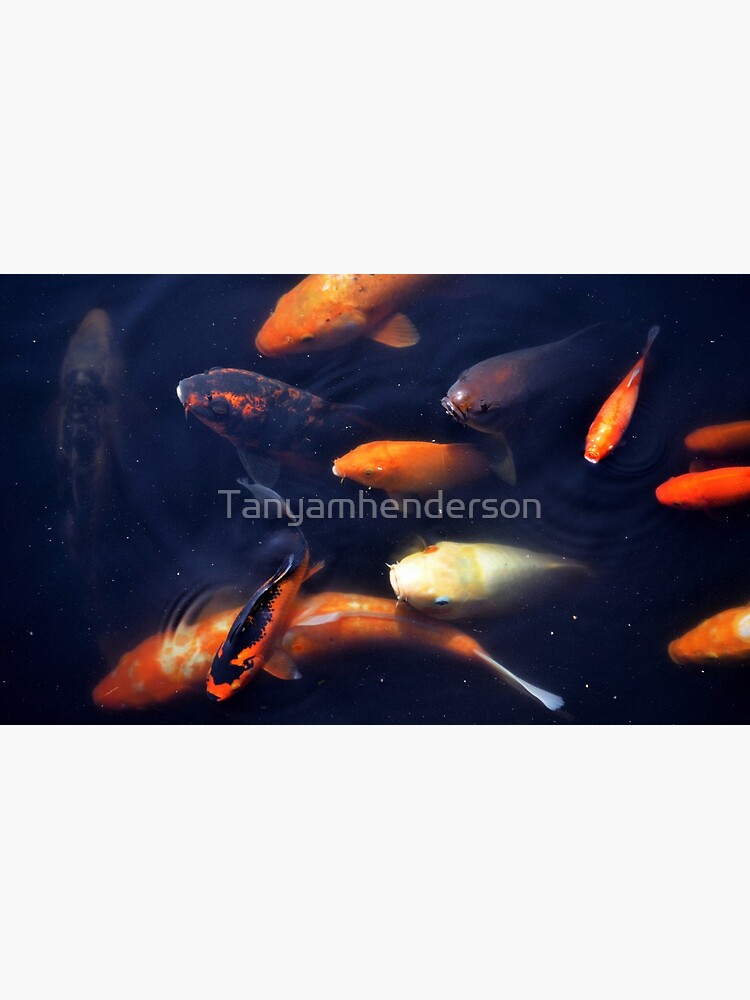fish by Tanyamhenderson