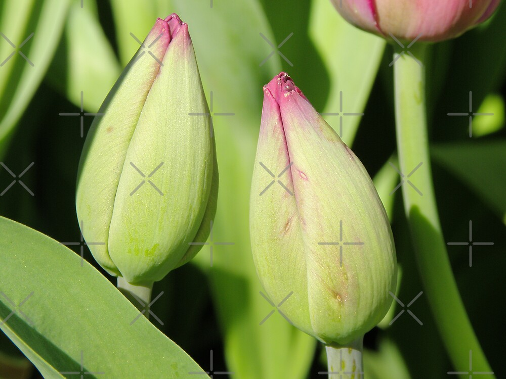 Budding Beauties by CapturedByKylie