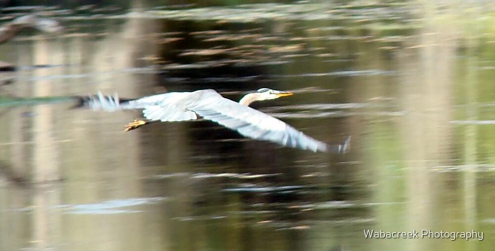 In  Flight by Jocelyne Phillips