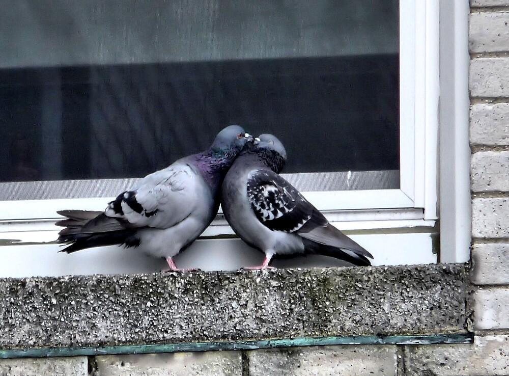 Pigeon Love  by rjf5