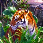 Tiger Bright by Marie Terry