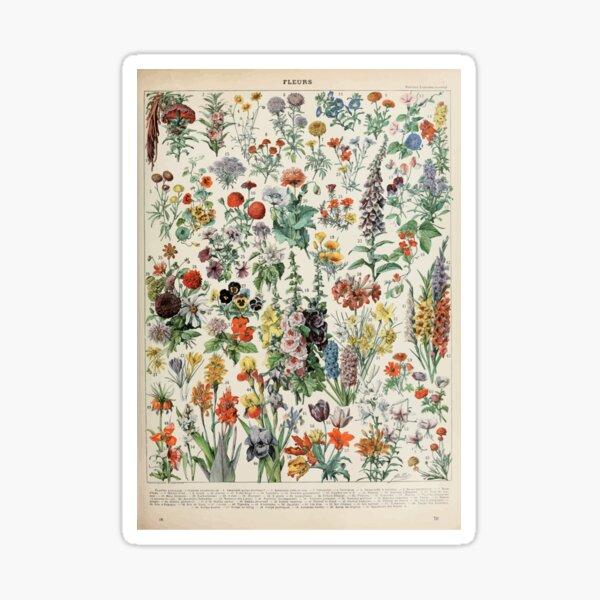 Adolphe Millot fleurs A Sticker