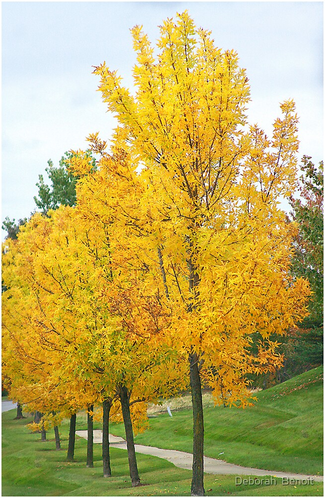 Yellow Fall Colors by Deborah  Benoit