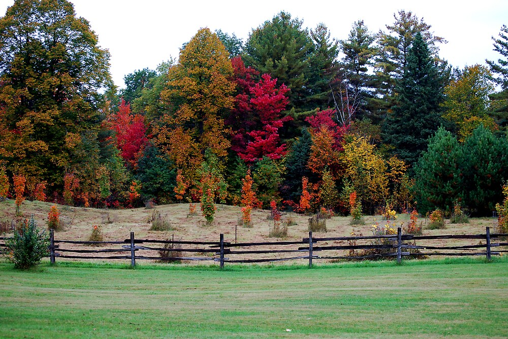 Fenced in Colours by Robert Goulet