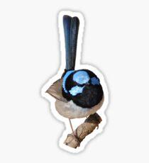 Superb Fairy-wren male Sticker