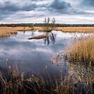 Westhay Moor Nature Reserve by Robbie Labanowski