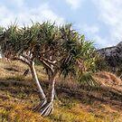 On Burleigh Headland by Murray Swift