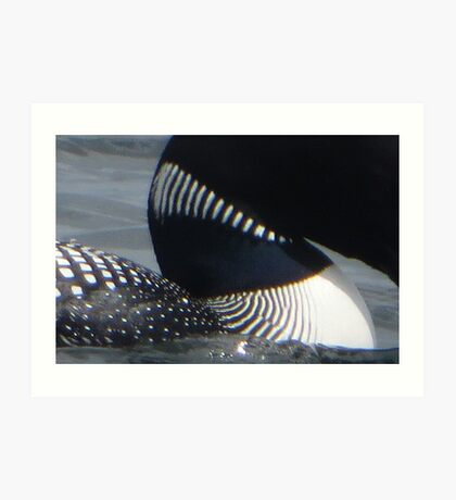 Loon Patterns Art Print