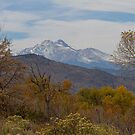 Rocky Mountain Foothills View by Bo Insogna