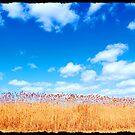 New Jersey shore grass or the old New Jersey sticks by Littlehalfwings