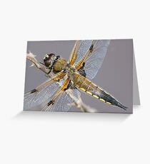 Dragonfly detail Greeting Card