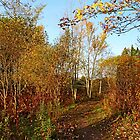 Fall Path by Debbie Oppermann