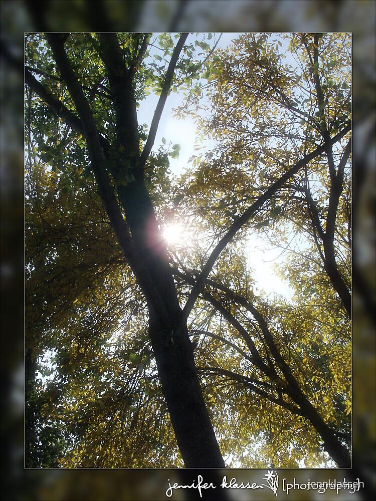 Winking through the trees by jennklassen