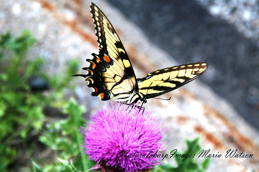 butterfly, flower by naturalsharp