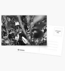 shrub Postcards