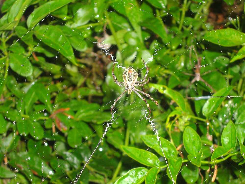 Incy Wincy Spider by LaurenM258