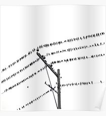 Birds On Electric Wire Poster