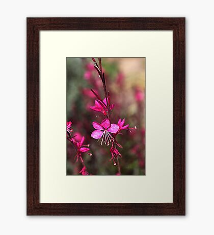 Pink Butterfly, Flowers Framed Print
