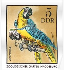 1975 East Germany Zoo Macaws Postage Stamp Poster