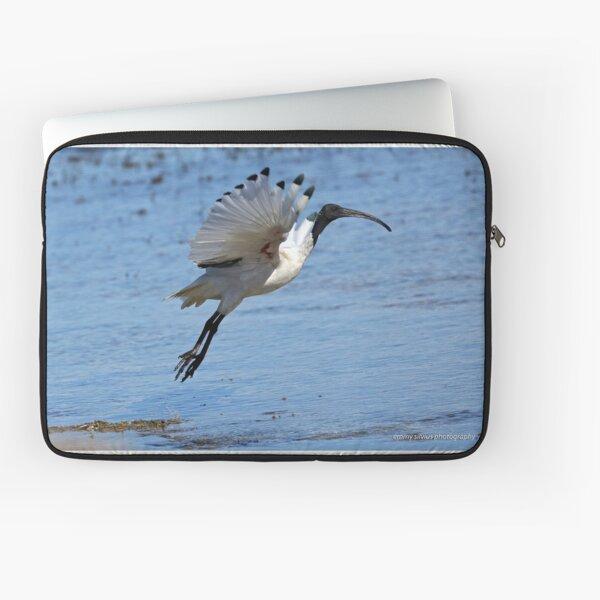 Australian White Ibis (4980) Laptop Sleeve