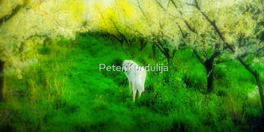 Bella's Dream by Peter Kurdulija