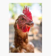 Closeup Rooster Farm Photographic Print