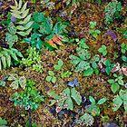 Forest Floor, Mt Rainier by Harry Oldmeadow