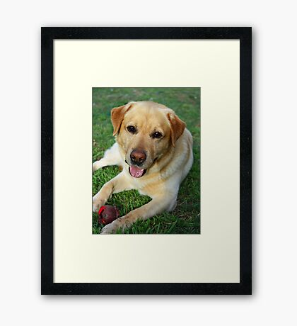 The Golden Boy Framed Print