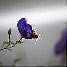 Bumblebee by Yana Art