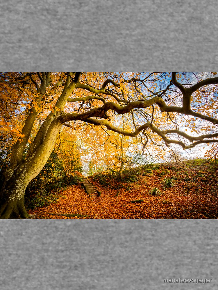 Autumns Golden Colours by manateevoyager