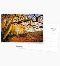 Autumns Golden Colours Postcards