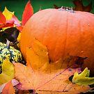 Autumn by JEZ22