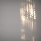 shadows of lace 2 by Tasha Nicholls