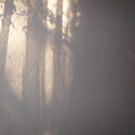 shadows of lace 3 by Tasha Nicholls