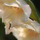 Gladioli by Pamela Jayne Smith