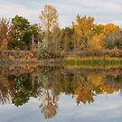 Peaceful Calm Autumn Afternoon by Bo Insogna