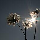Caught in the Sun by Pamela Jayne Smith