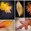 Autumn Leaves by JEZ22
