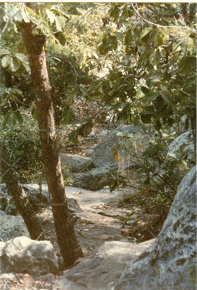 Wooded Rocky Path by Sheila Simpson