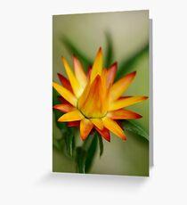 Sunshine Bright Paper Daisy Greeting Card